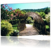 pt_bambous-france-9209710956-902087